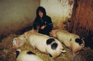 Ann Uglow tends to her pigs in the isolation unit on her farm in Devon.