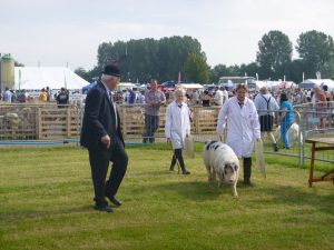 Fowgill Rufus gets put thro his paces by judge Peter Brier